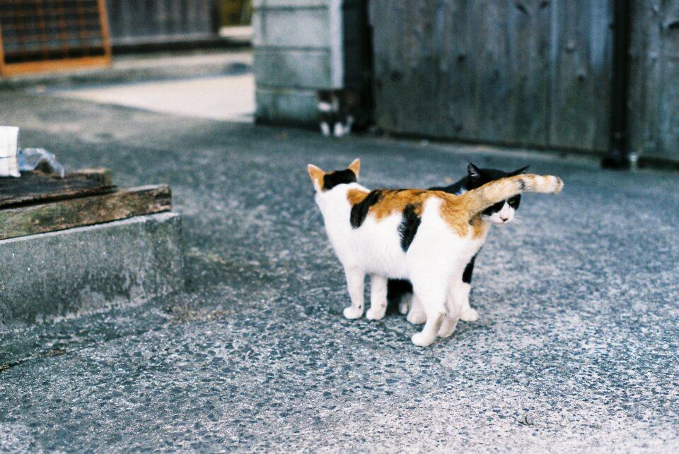 大崎下島の猫たち