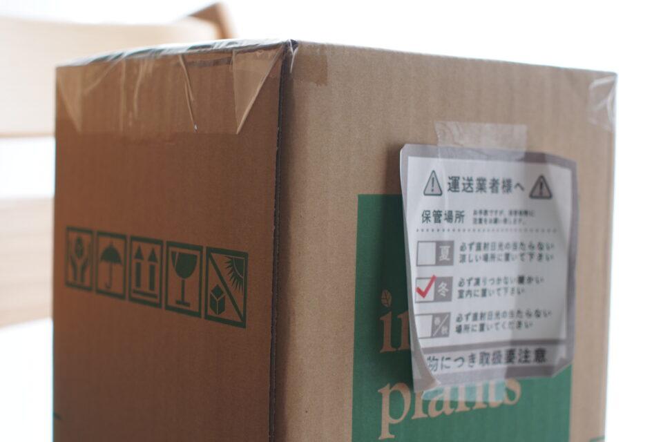 インテリアプランツから届いた植物