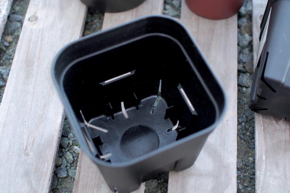 プレステラ ブラック鉢