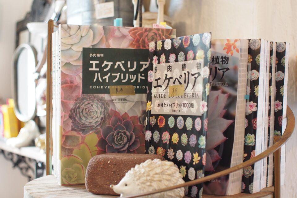 羽兼直行 エケベリアの本