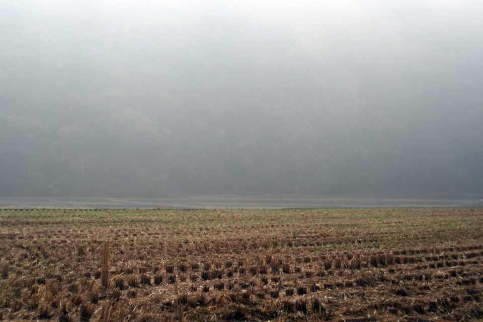 霧の中の写真