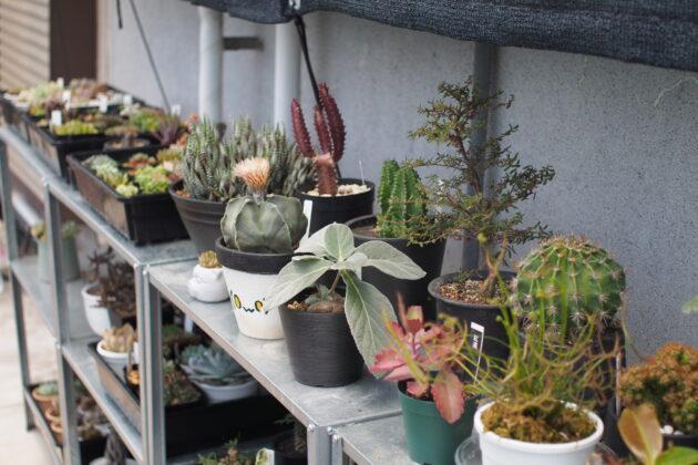 屋外の植物棚 夏越しバージョン