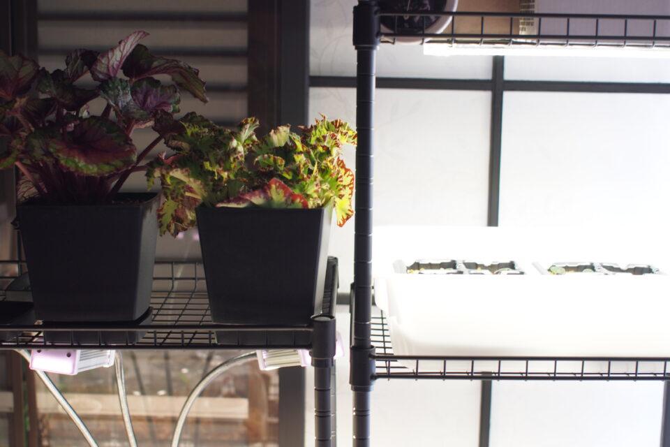 ダイソーでつくった植物棚